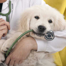 medische controle voor puppies