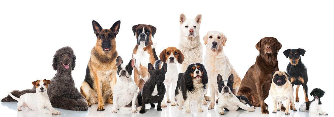 Dierenarts voor honden