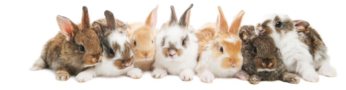 Dierenarts voor konijnen