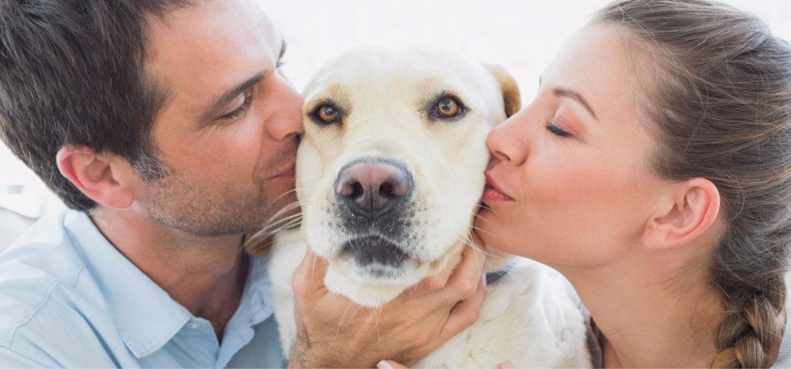 Euthanasie voor honden