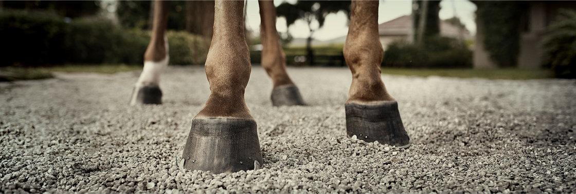 Hoefproblemen bij paarden