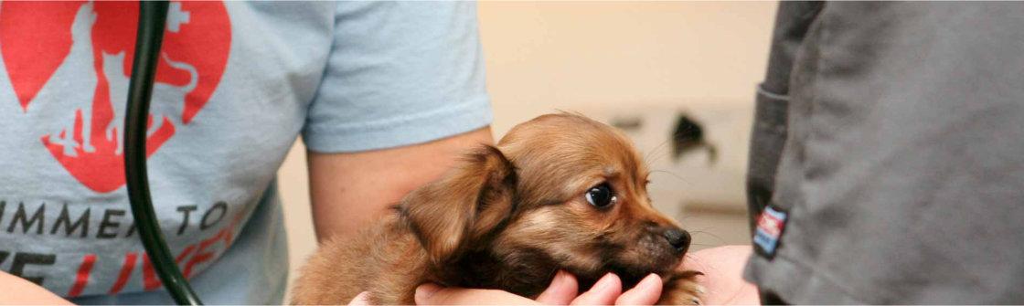 Hond chippen