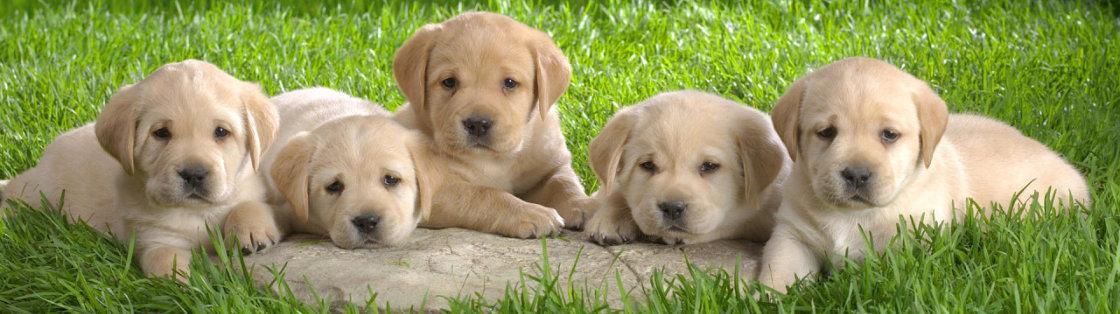 Eerste medische checkup voor puppies