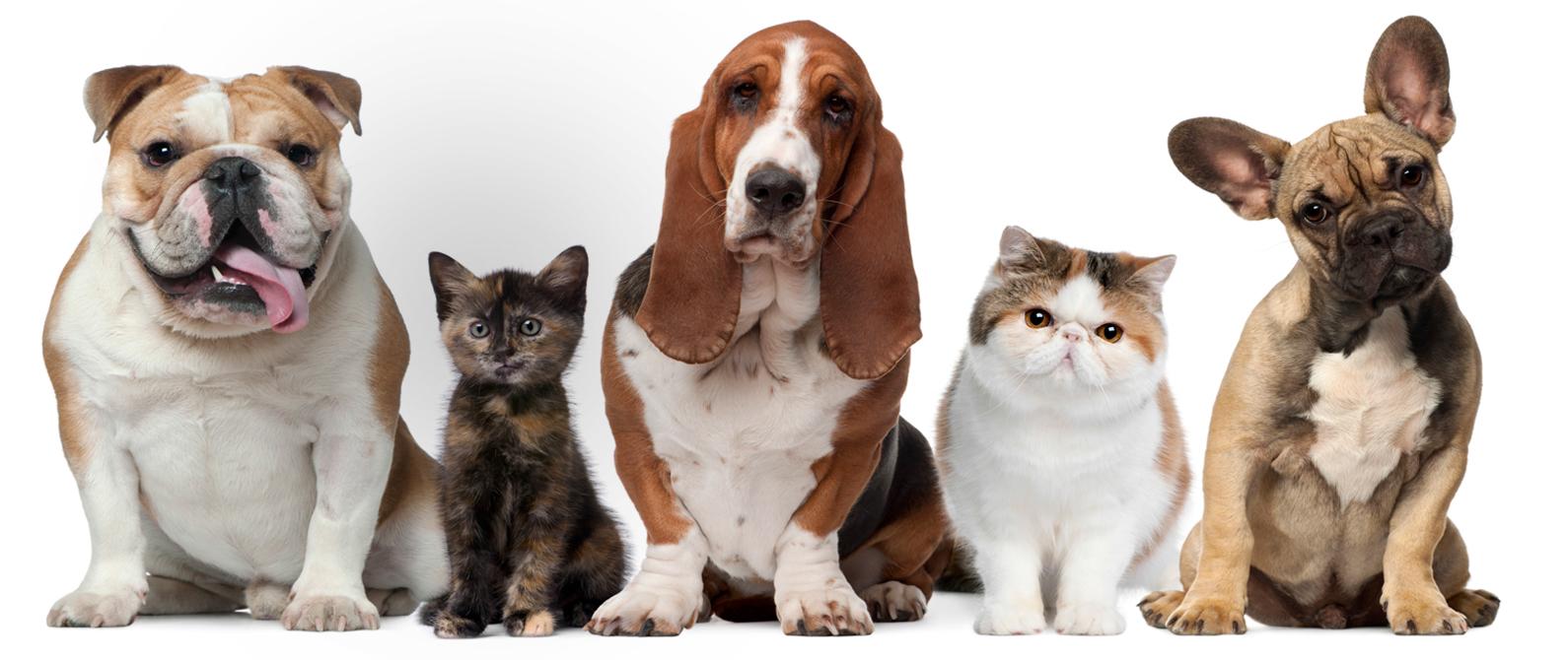 dierenarts huisdieren - dierenartsenpraktijk