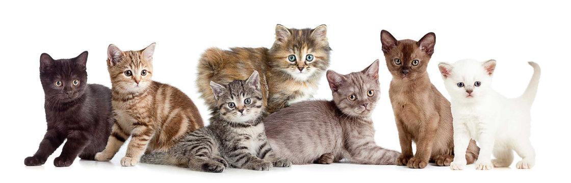 Dierenarts voor katten