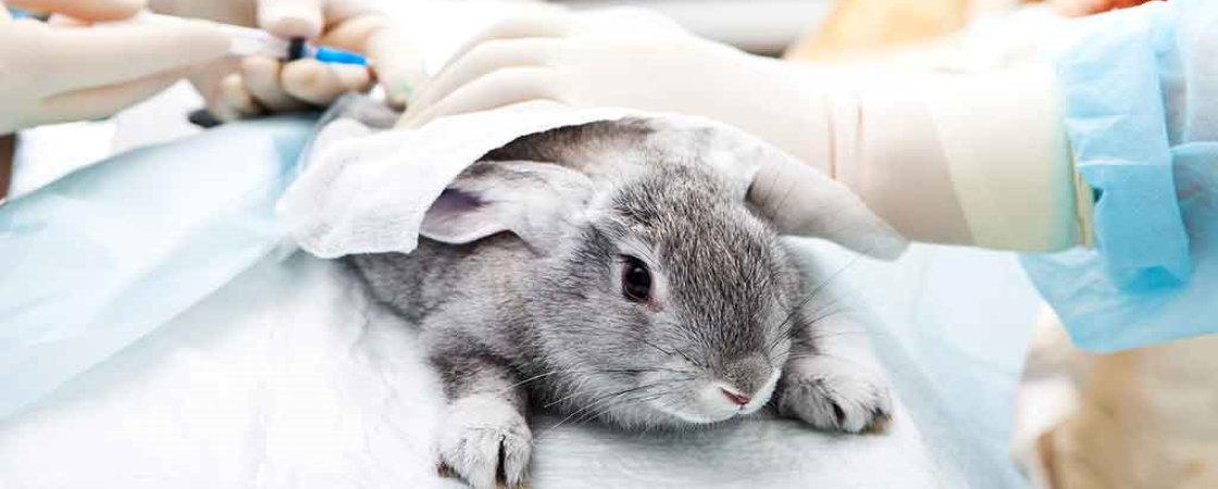 medisch onderzoek konijn