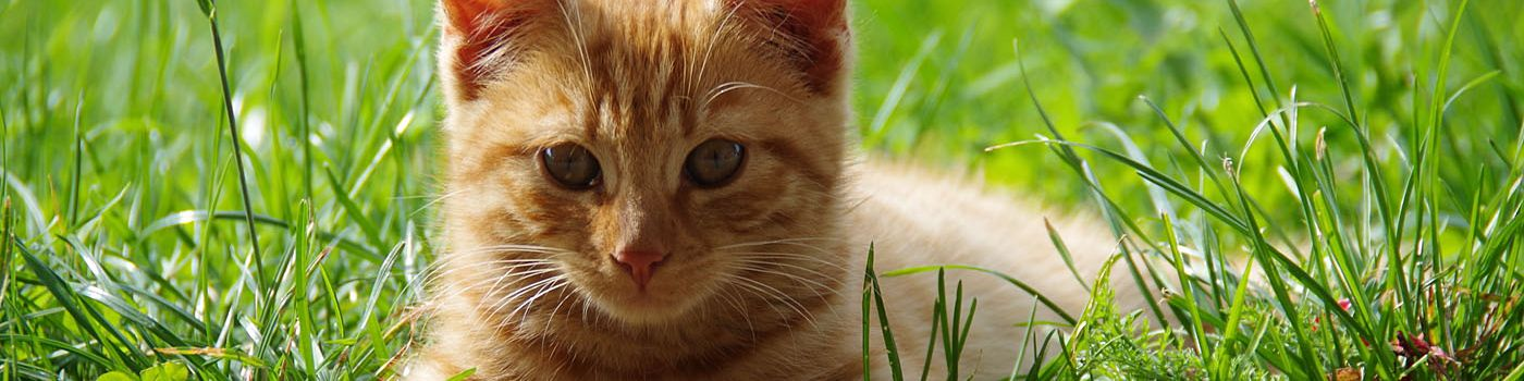 ontwormen kat
