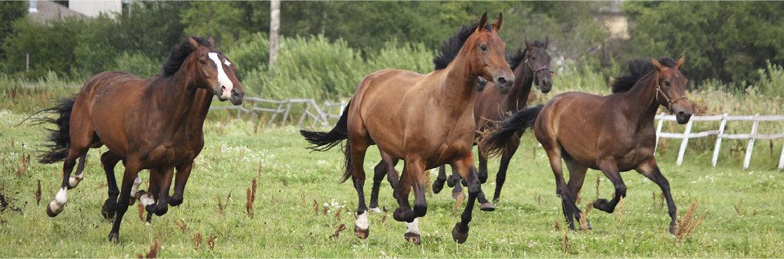 spoedgevallen paarden