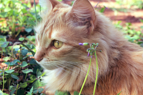 Castratie en sterilisatie bij katten